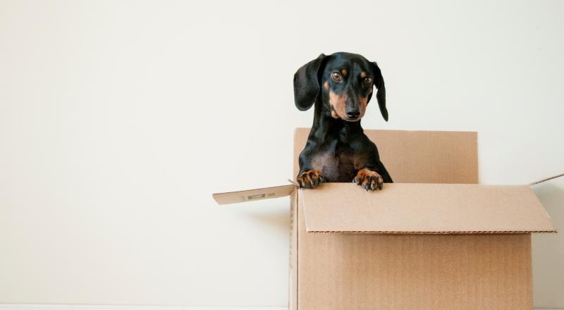 Stuck In a Box?